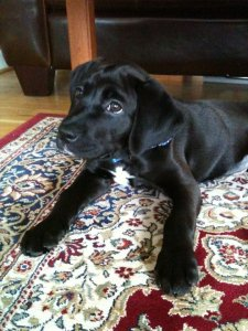 """I'm told """"Bogey"""" is the early favorite for a name if she ever gets a little brother or sister."""