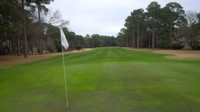 Golden Bear 5 green