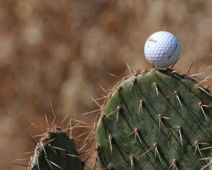 I guess the difference is that you should know ahead of time not to hit into the cactus.