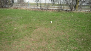 """The winter's """"temporary teeboxes"""" were disappointingly poor at Cassell Creek."""