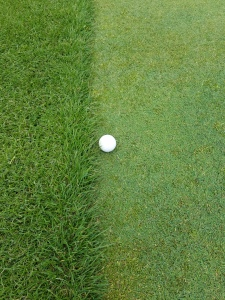 Favorable spring growing conditions have produced thick, club-snatching collars around the greens.